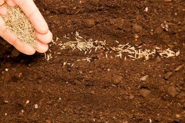 Seeds on fertile soil