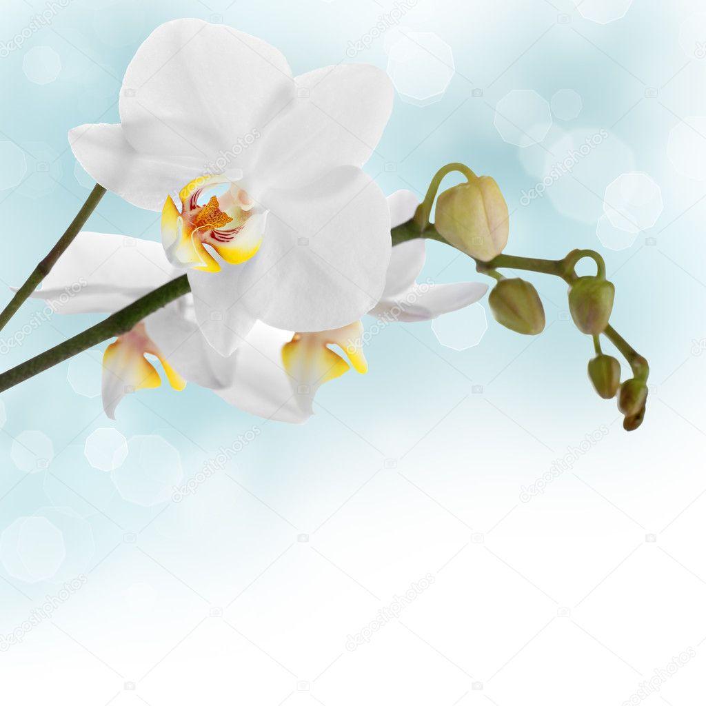 White orchid design border