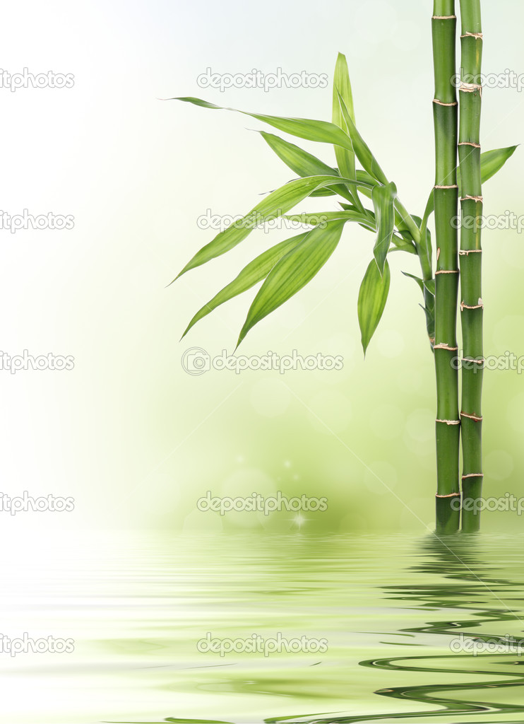 Lucky bamboo design border