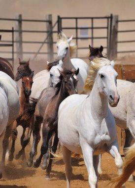 Horses in herd. stock vector
