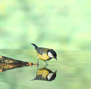 Bird hunting.