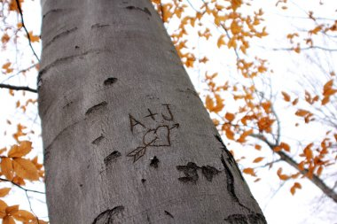 Love Tree Carving II