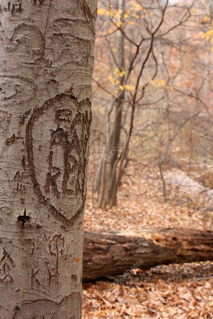 Tree Carvings II