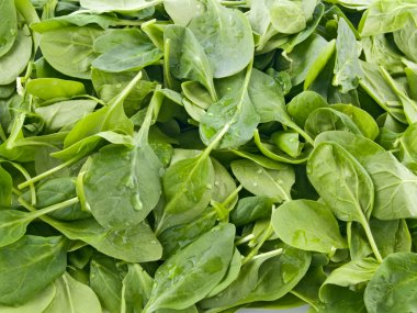 Perfect baby spinach greens