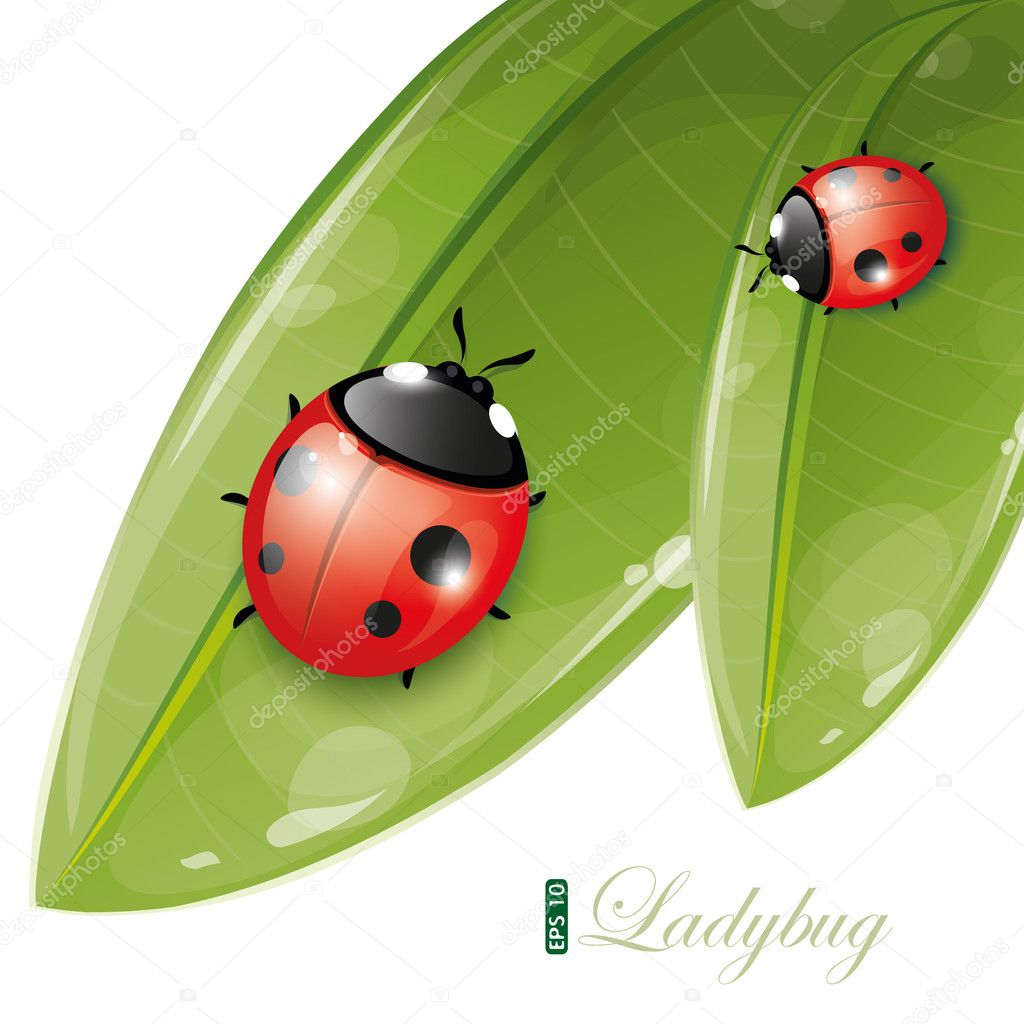 Green leaves design with ladybug