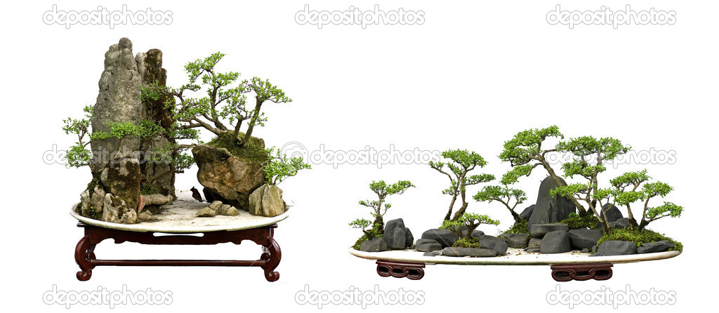China Bonsai Stock Photo C Jackq 7524495