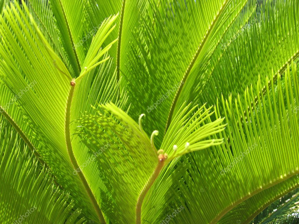 Close up of green palm tree leaves