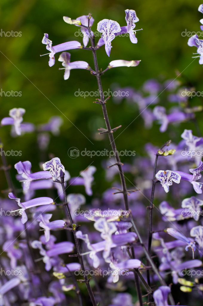 Small White And Purple Flowers Stock Photo Calvste 7916689