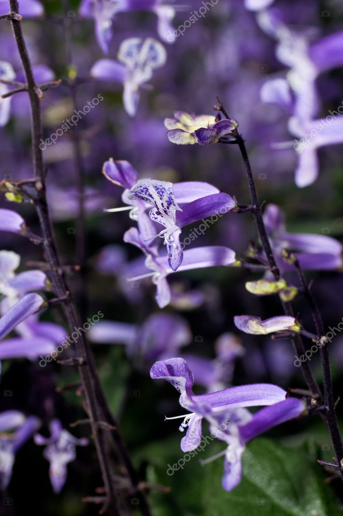 Small Purple And White Tropical Flowers Stock Photo 7916721