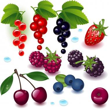 Set berries