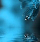 kapka vody spadající mimo list