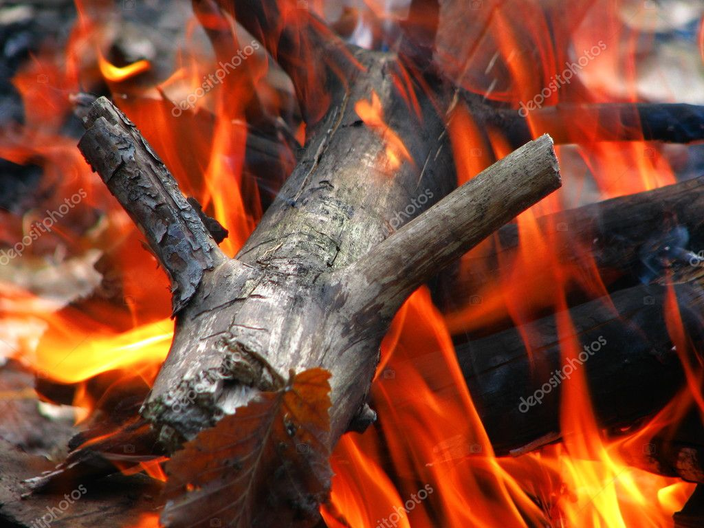 The wood in the fire