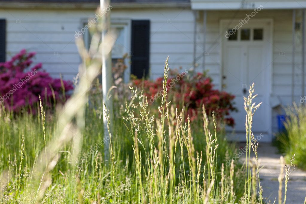 Long Grass Outside Abandoned Cape Cod Single Family Home Marylan