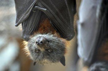 Bat close up