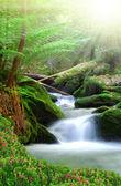 vodopád v národním parku Šumava