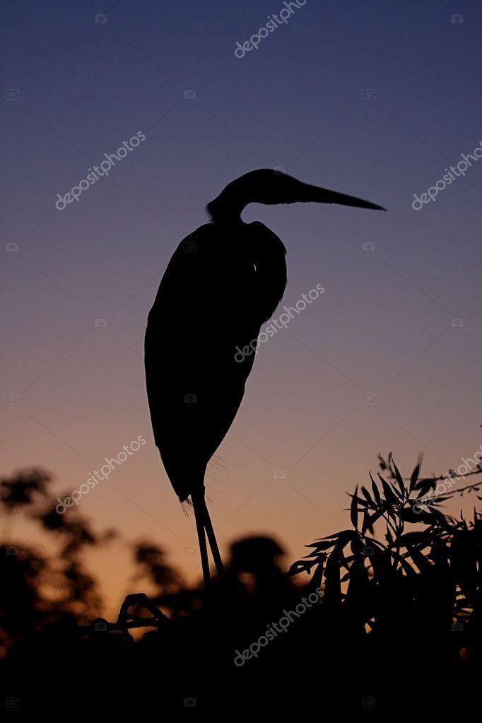great egret silhouette stock photo steve byland 7915947