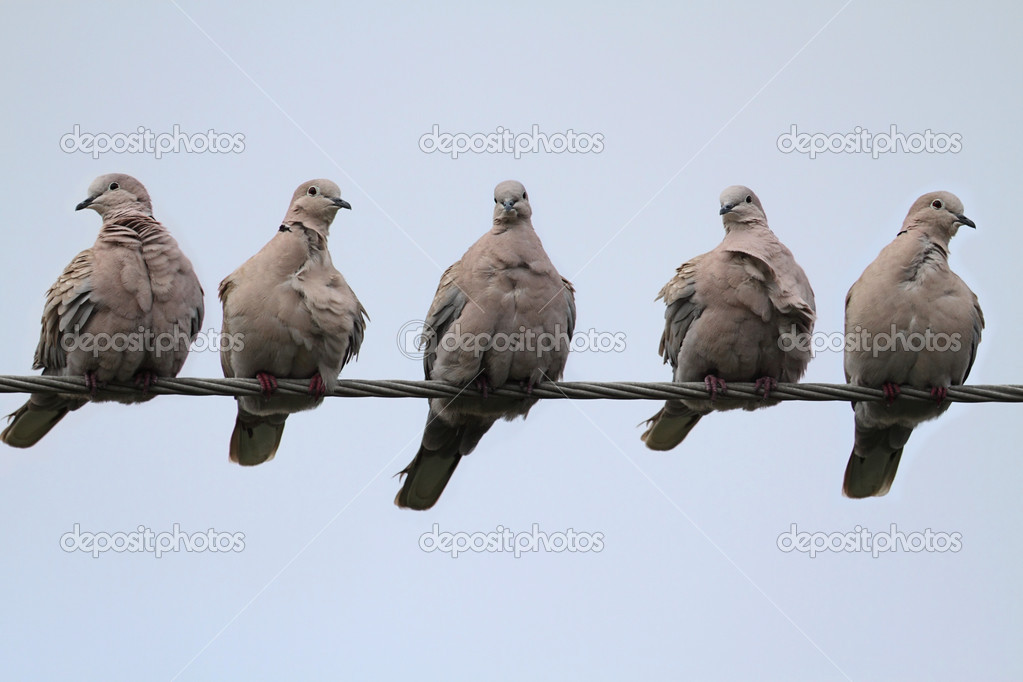 Doves On A Wire