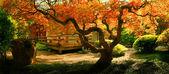 strom v asijské zahradě
