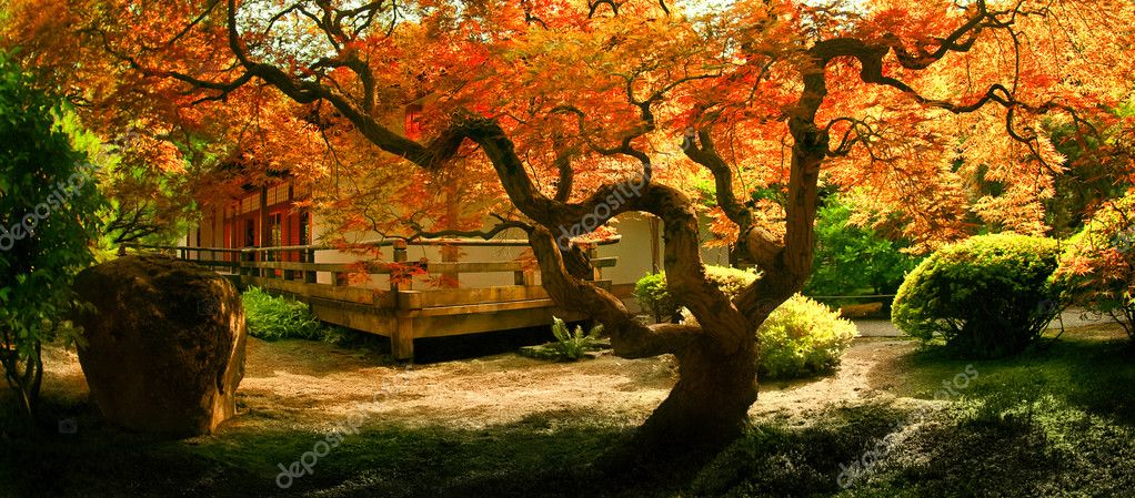 Tree in an Asian Garden