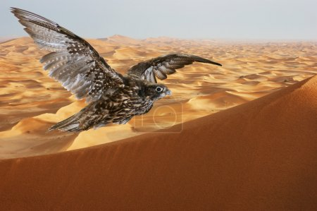 Falcon soaring over sand dunes in the Arabian
