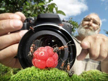 Macro photographer managing ants