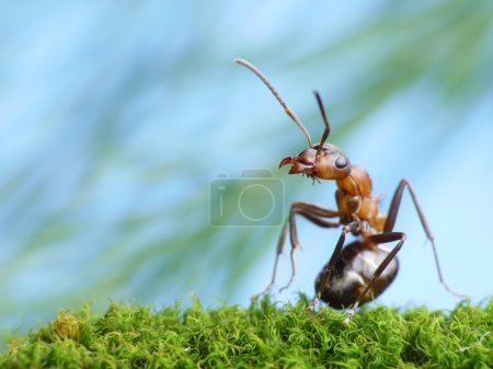 Photo for Ant formica rufa pays attention - Royalty Free Image