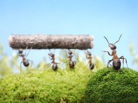 Ants, team work management
