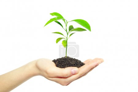 Photo for Plant in female hands isolated on white background - Royalty Free Image