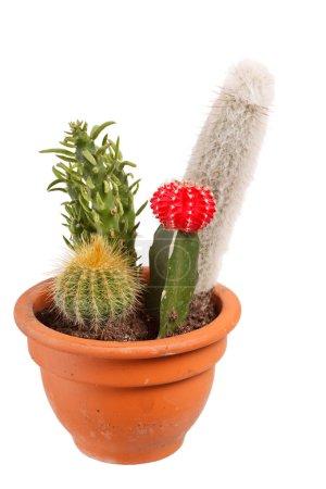 Photo for Cactus garden - Royalty Free Image