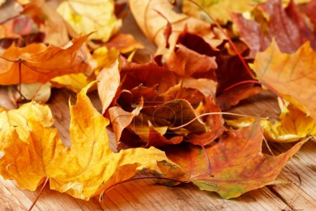 Photo for Dried leaves - Royalty Free Image