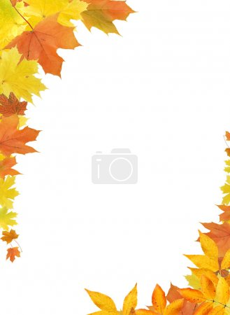 Photo pour Belle bordure faite de couleur tombant maple leaves - image libre de droit