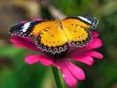 Motýl na květině