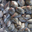 An assortment of fresh scup fish is being offered ...