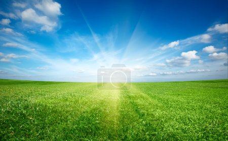Sunset sun and field of green fresh grass under blue sky