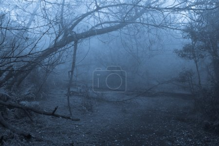 Tropical forest in fog