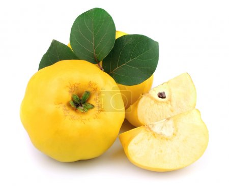 Ripe quince with leaves
