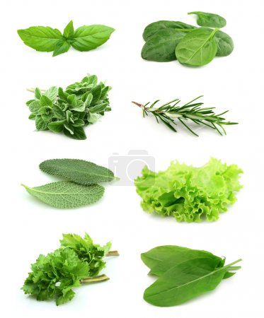 Photo for Collage of green and juice spice on white background. - Royalty Free Image