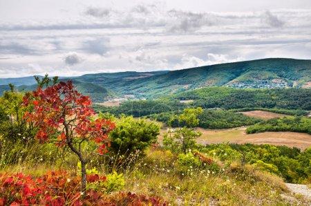 Photo pour Pré vert en montagne. composition de la nature. - image libre de droit