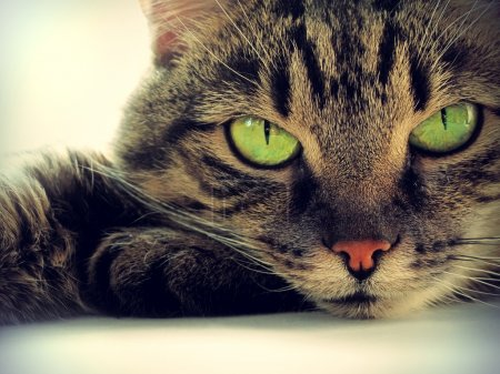 Portrait of green-eyed cat...