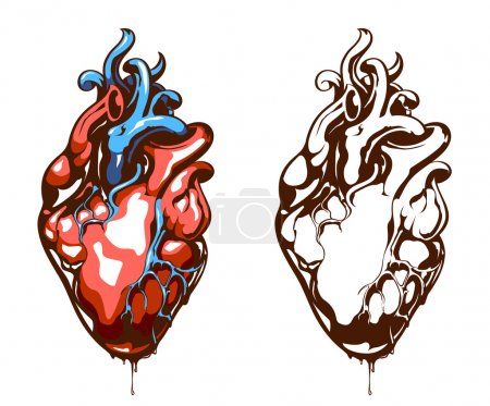 Illustration for Anatomical heart isolated on white. Grunge stile. Vector EPS 10 illustration. - Royalty Free Image