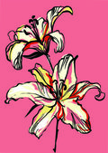 Two lilies on a pink background
