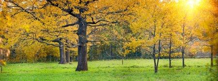 Sunny park with oak
