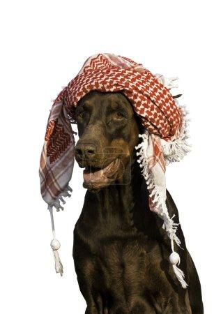 Dog in hat.