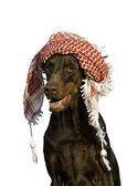 Kutya kalapban
