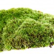 Moss on a white background...