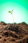 Zelené sazenice v novém pojetí života