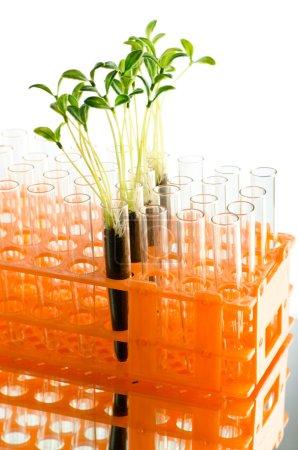Photo pour Expérience en laboratoire avec des feuilles vertes - image libre de droit