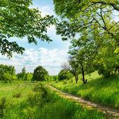 Forest road et bleu ciel