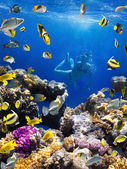 Coral colony, coral fish and young women