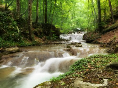 Photo pour Ruisseau forestier traversant les pierres - image libre de droit